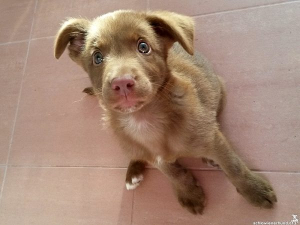 Ist das Deprivationssyndrom beim Hund therapierbar?