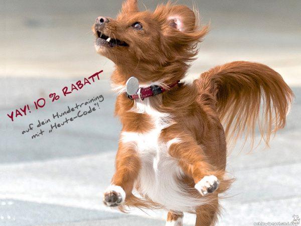 10% Rabatt auf Hundetraining bei Schlawienerhund