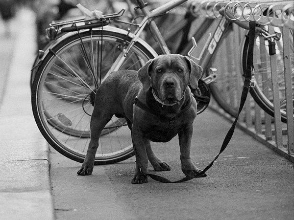 Welche Gefahren birgt das Anbinden des Hundes vor einem Geschäft?